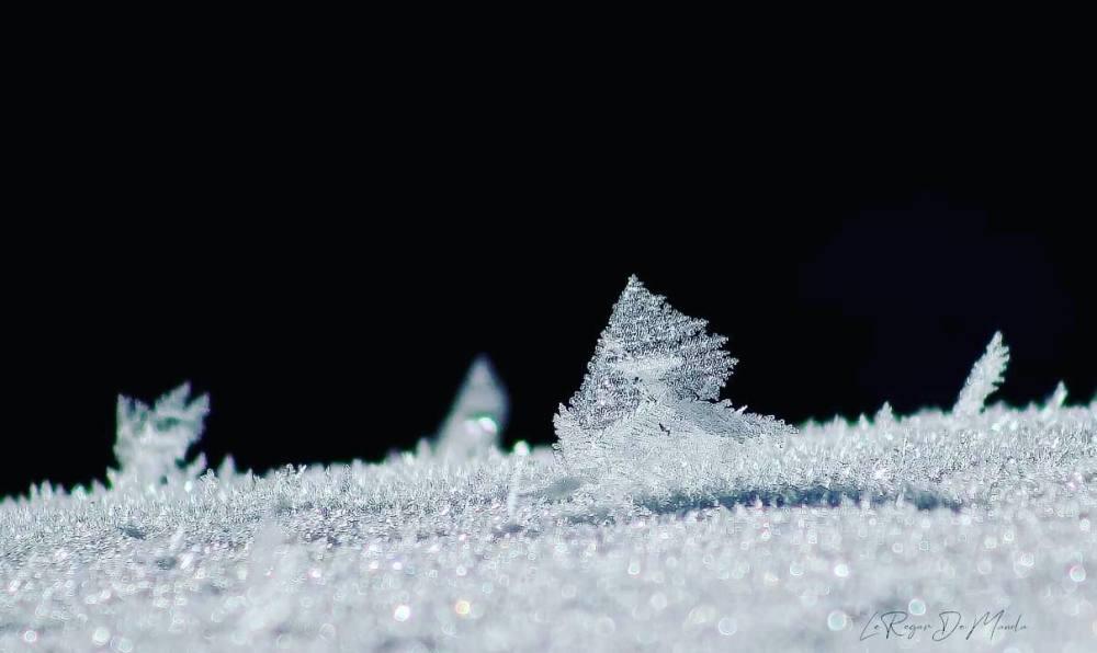 Cristaux de neige