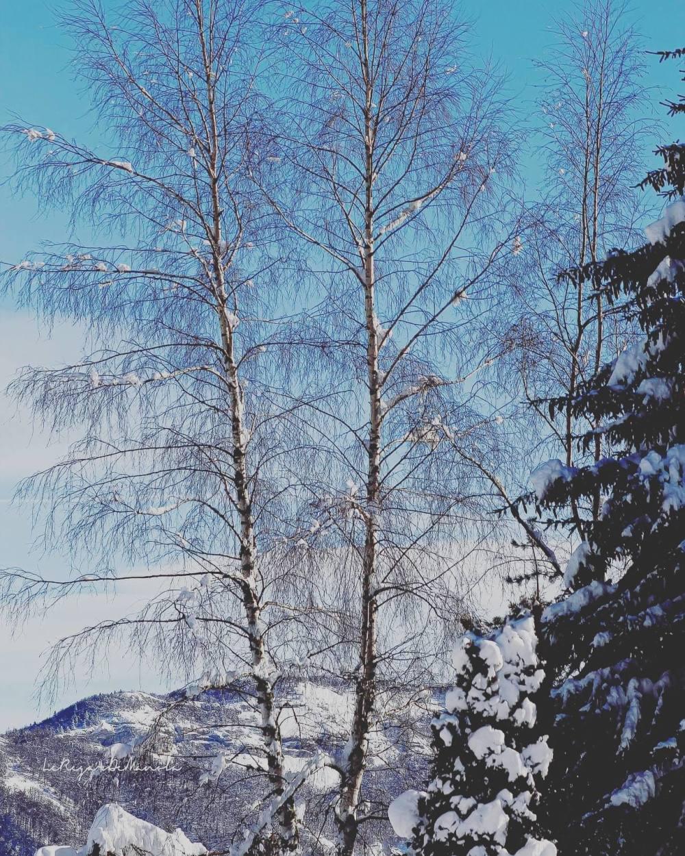 Un arbre Joyeux