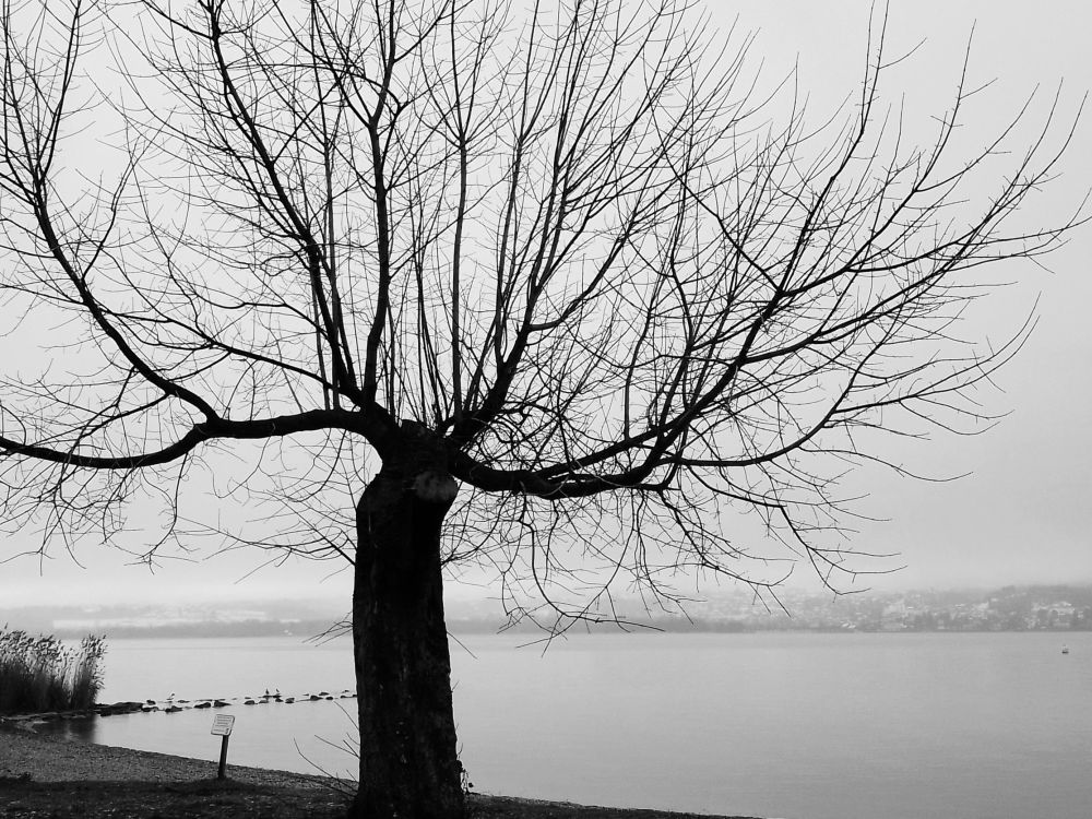 Au bord du lac du Bourget