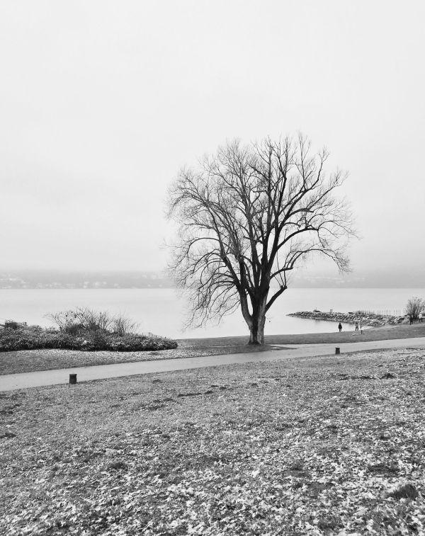 Près  du lac du Bourget