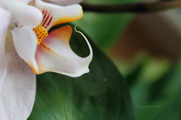 la beauté florale