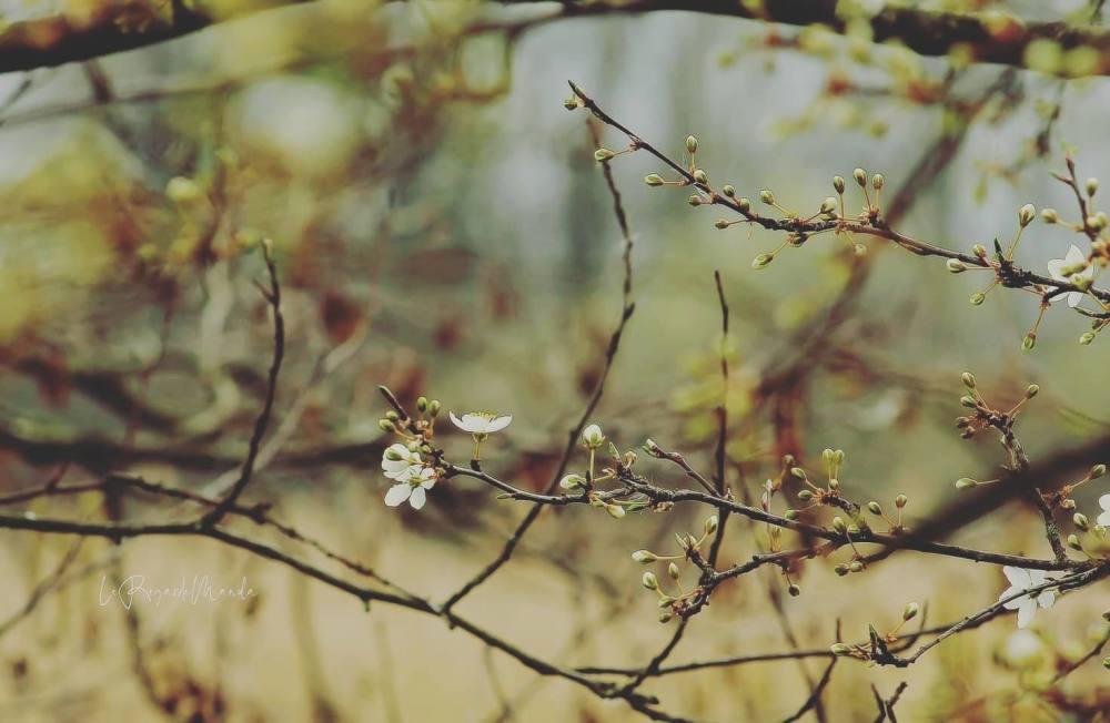 Fleurissements