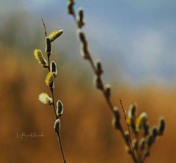 L'printemps arrive
