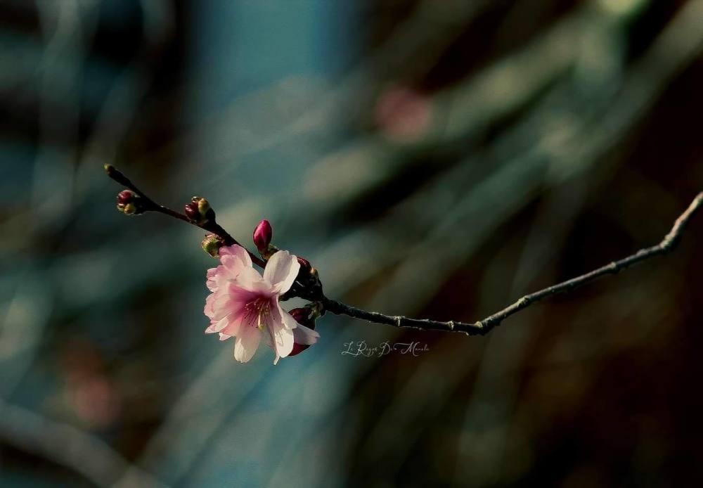 Floraison magique