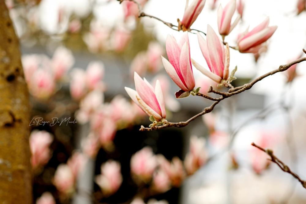 voir la vie en rose....