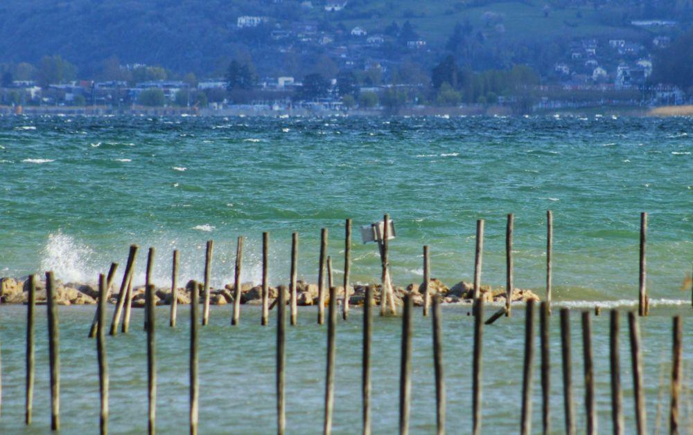 Au bird du lac