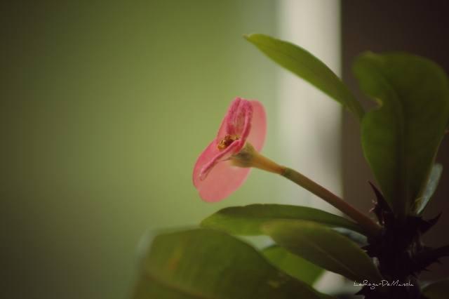 Fleur d'intérieur