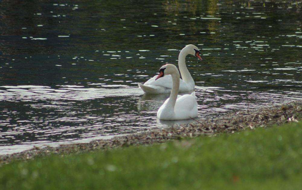 Le lac....