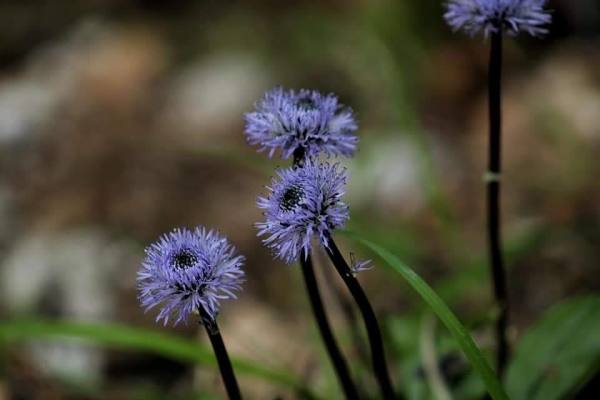 Fleurettes sauvages
