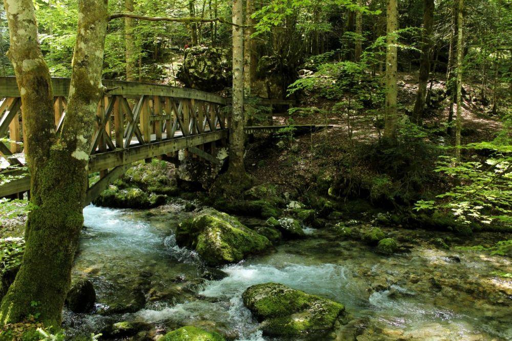 La magie d'une forêt
