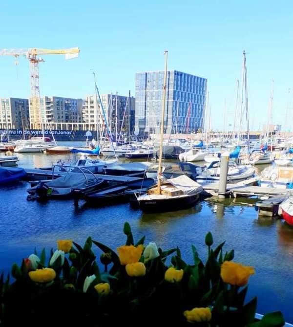 Tulpfestival Amsterdam The Netherlands IJburg