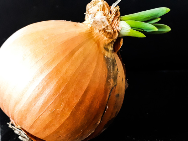Sprouting Onion