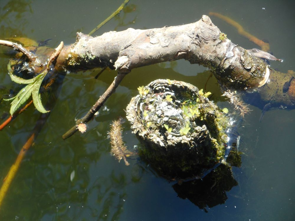 Still life in water