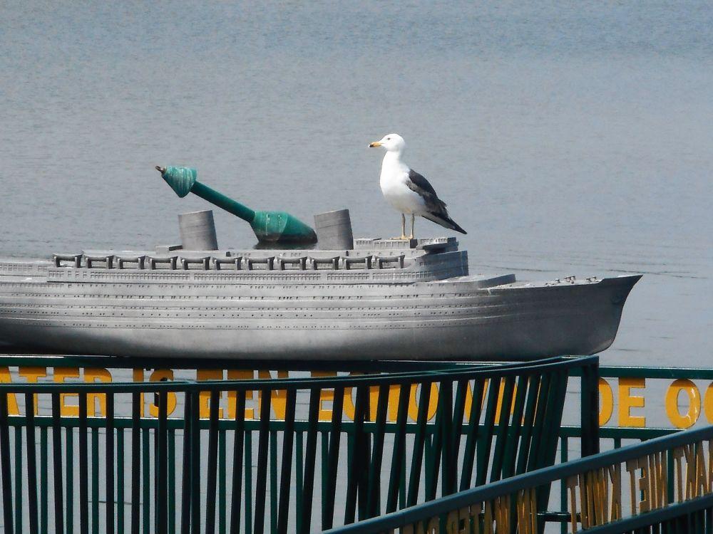 Seagull passenger