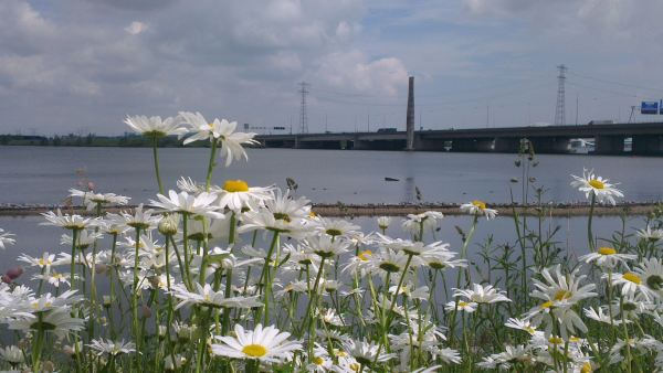 Flowerview
