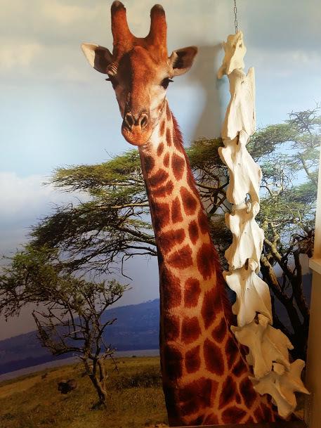 Stuffed giraffe and the skeleton of a giraffe neck