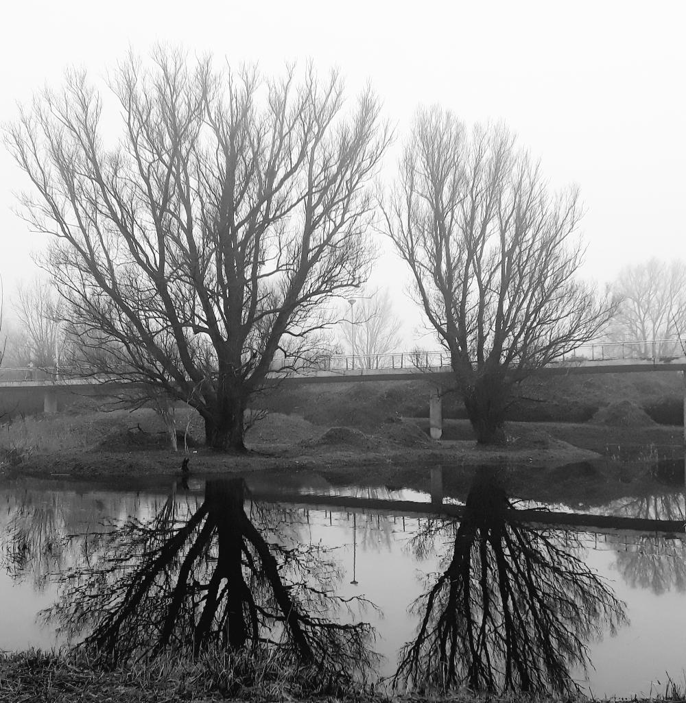 Reflection in B/W
