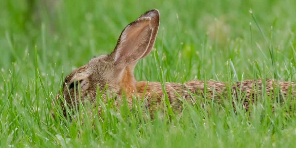 Rabbit Snooze
