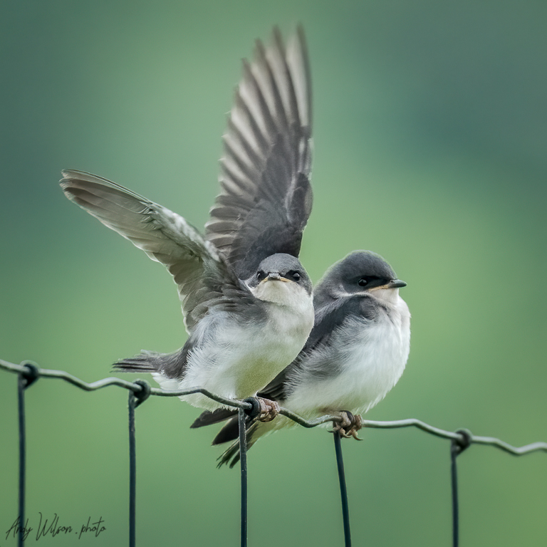 Two Birds On A Wire