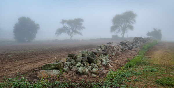A foggy morning in the countryside.