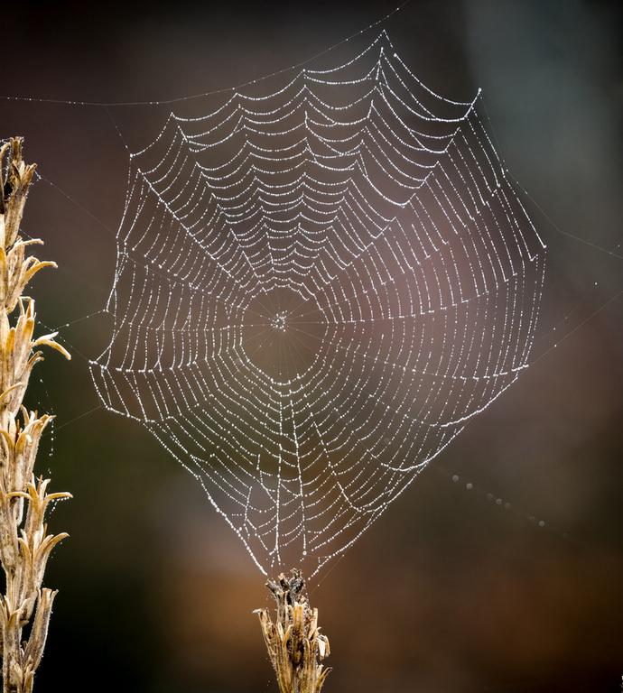 Balancing Web
