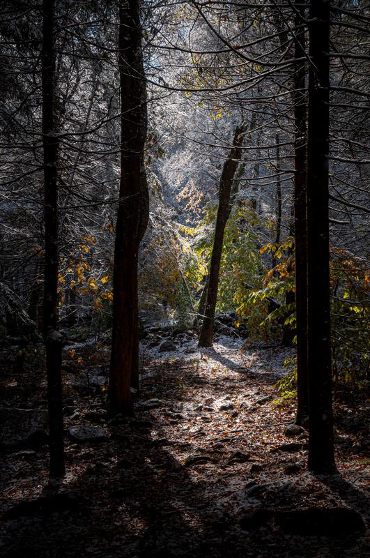 Hazel And Gretel's Black Forest