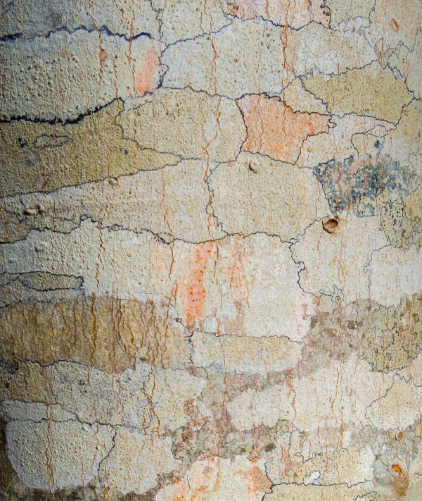 Tree Bark Colors