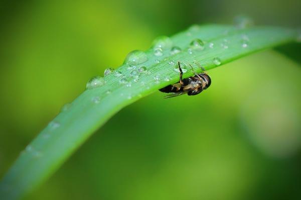 Fly Hiding