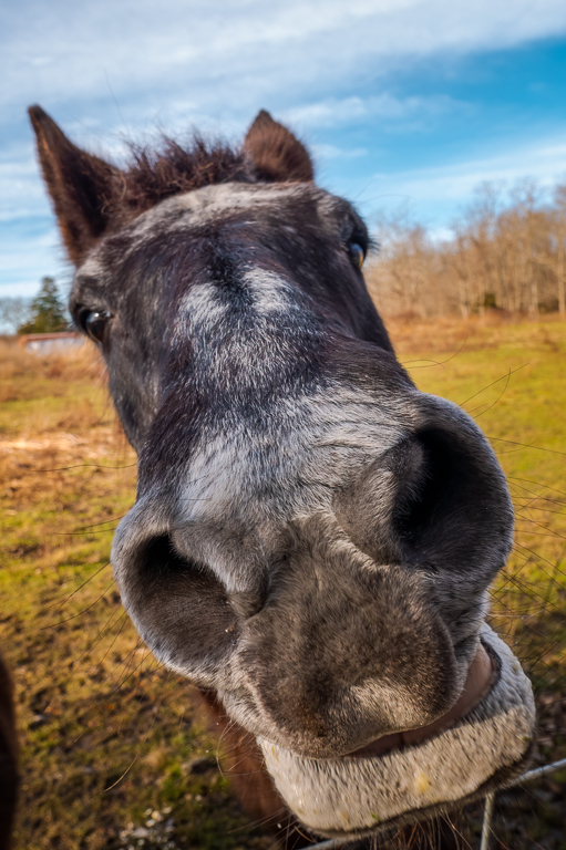Horse up close.