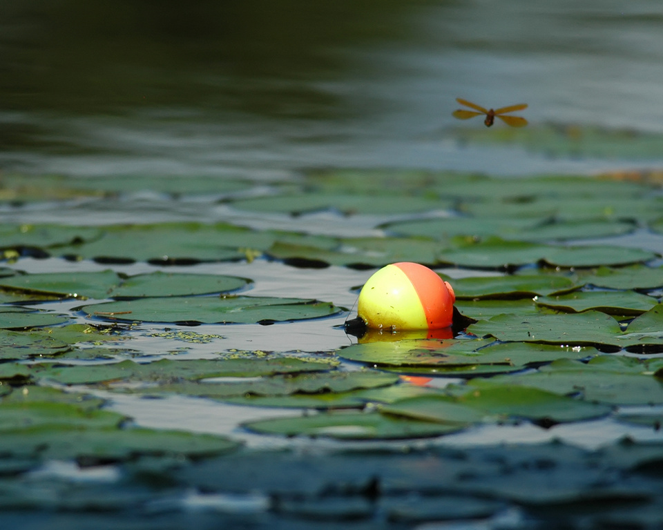 Fishing Bobber and Dragonfly