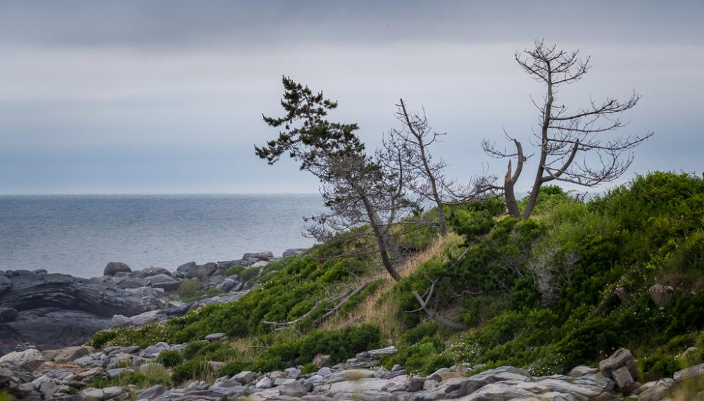 Tree Slowly Erodes