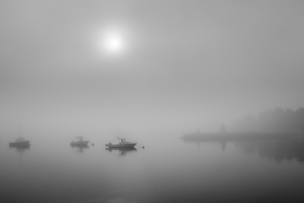 Foggy Morning At Kings Park
