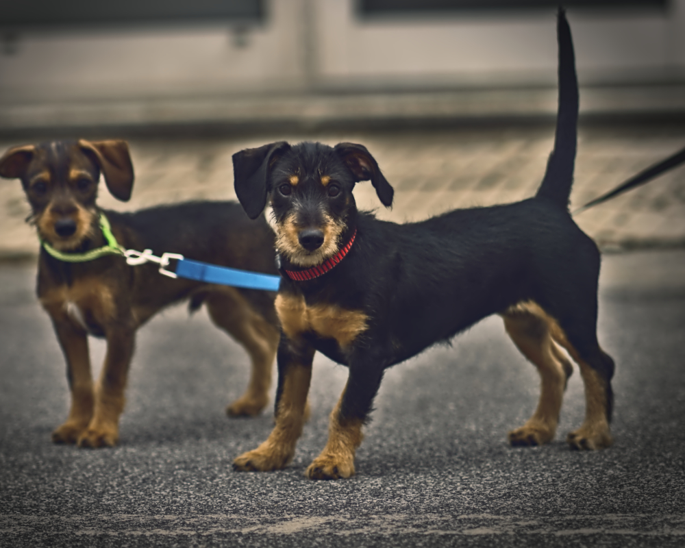 Dogs Puppies puppy Street Photography Guarda