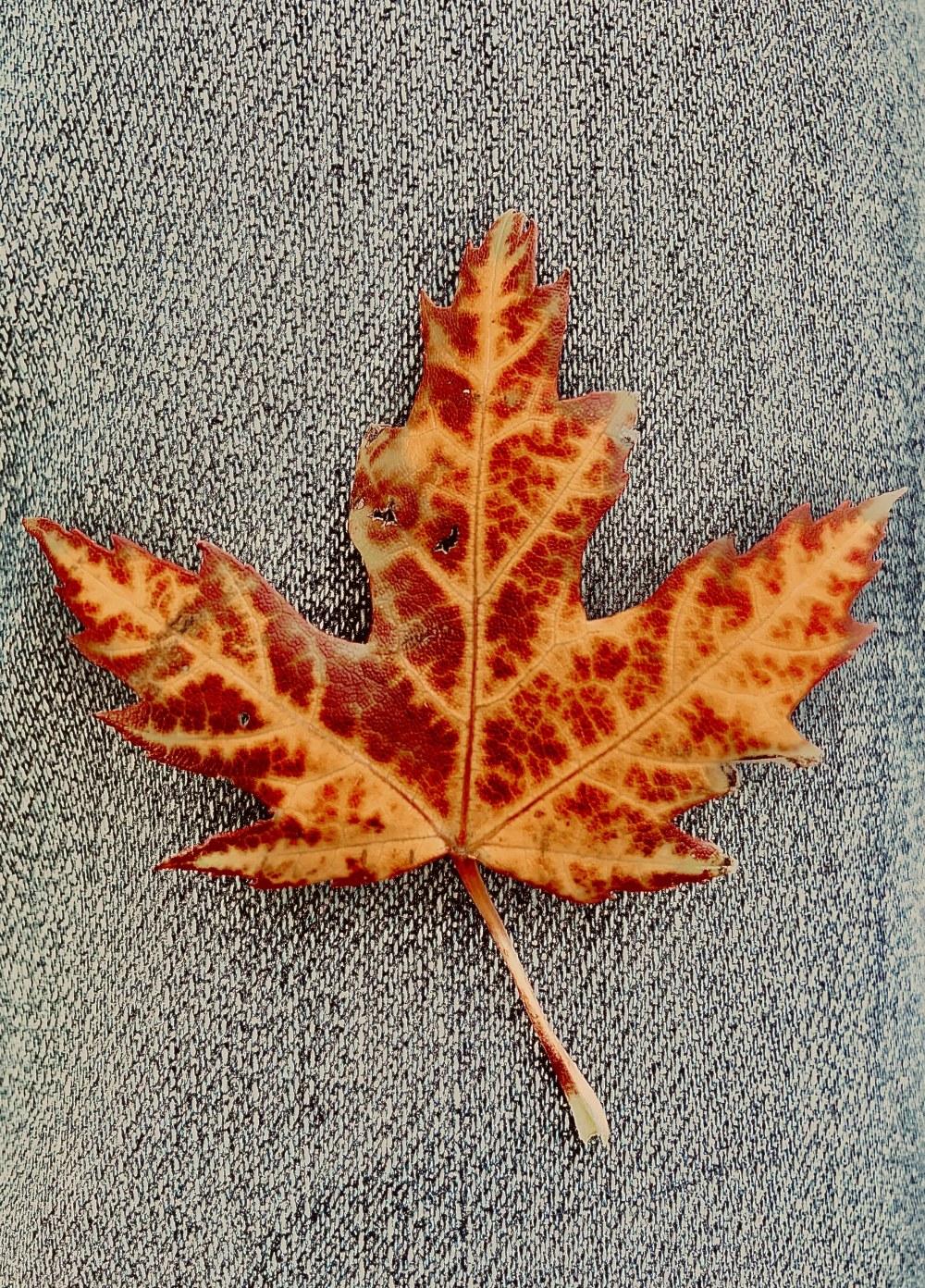 Sleepy Leaf