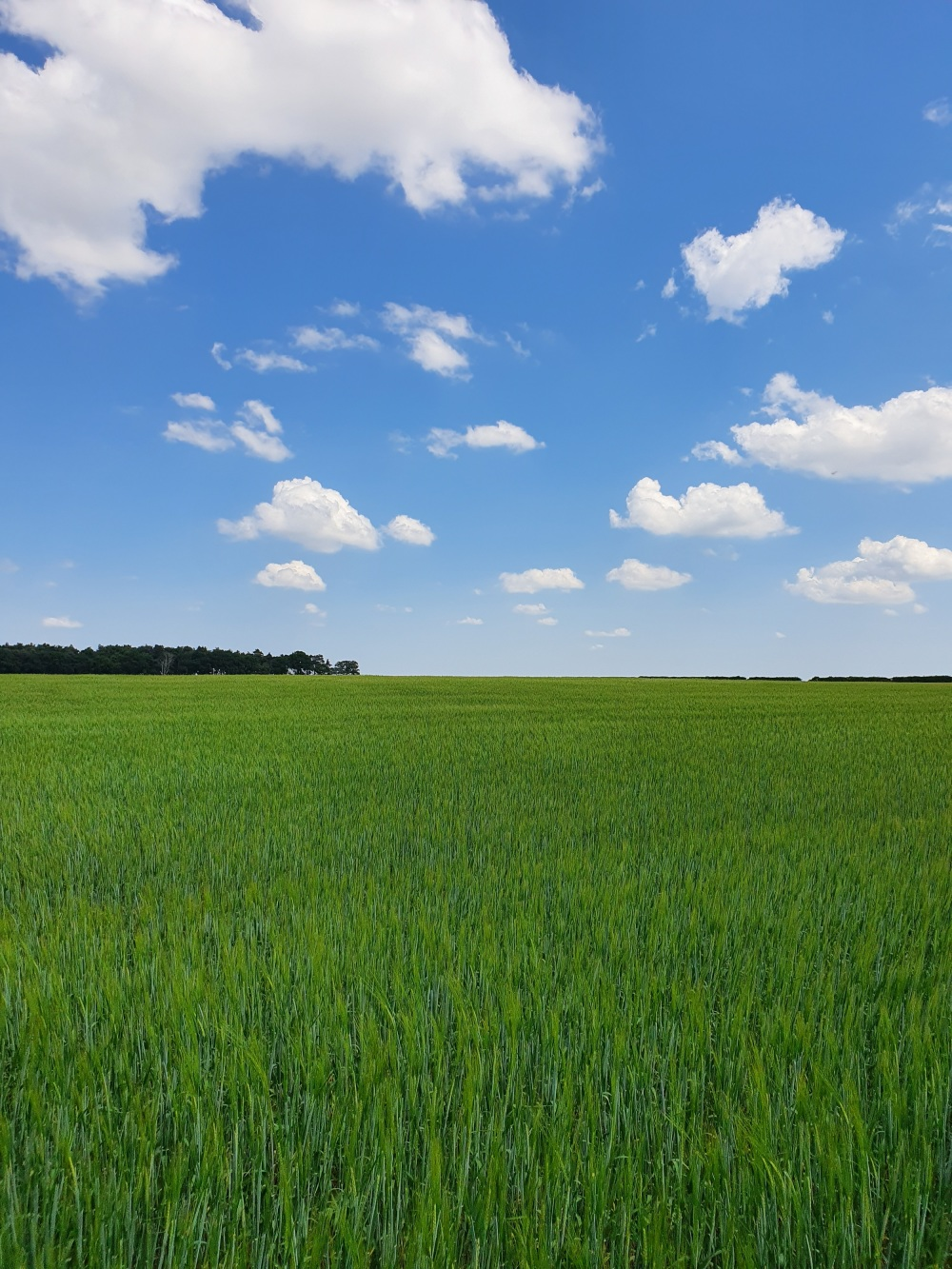 A field full of crops on a sunny day