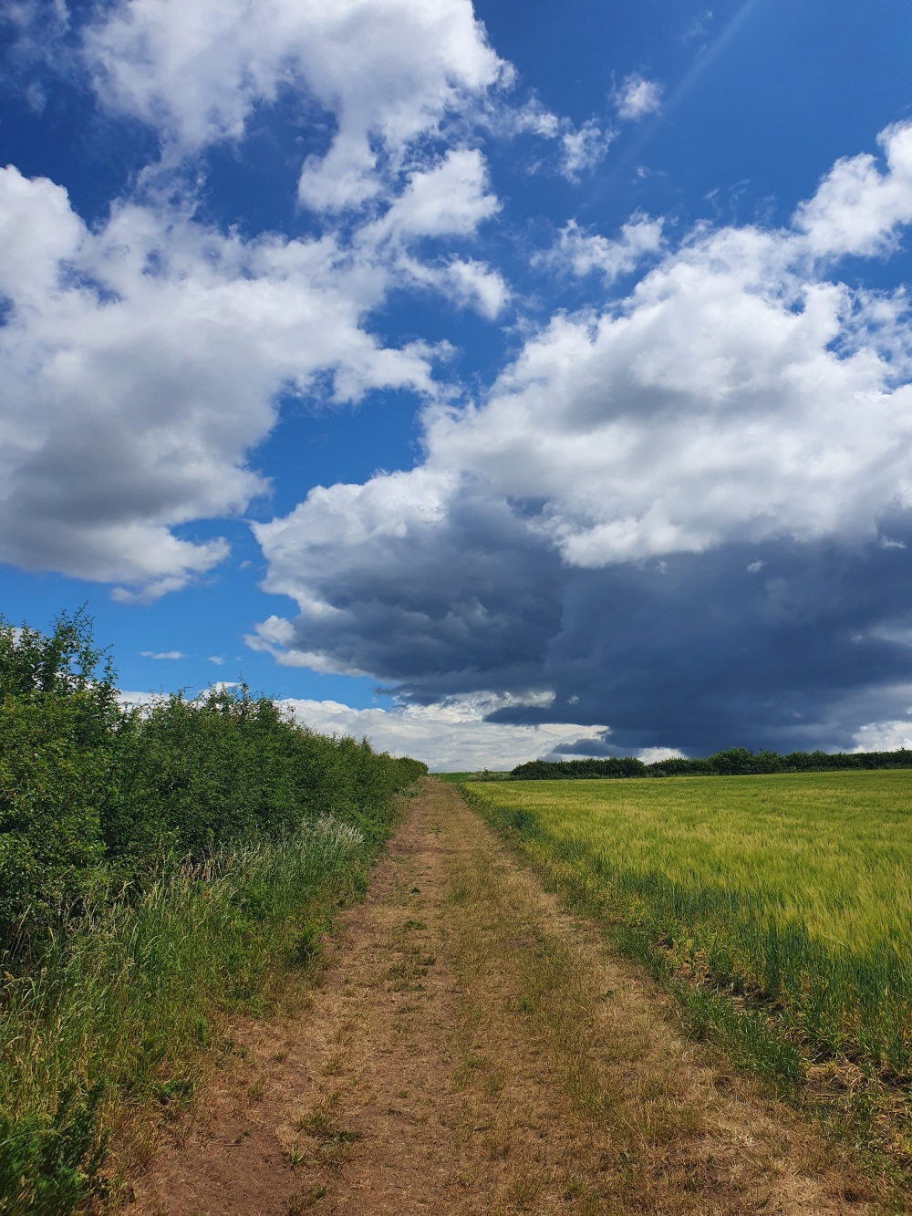 Pathway on summers day