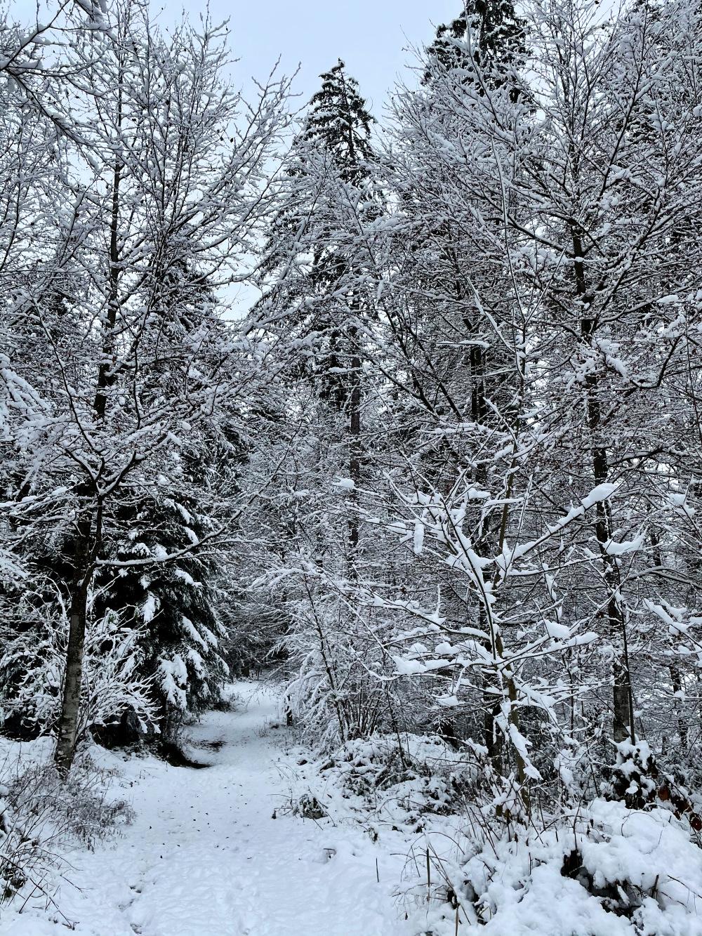 Encore des chutes de neige