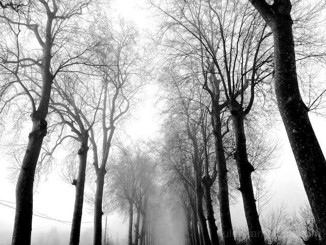 Trees in the mist on the road in France