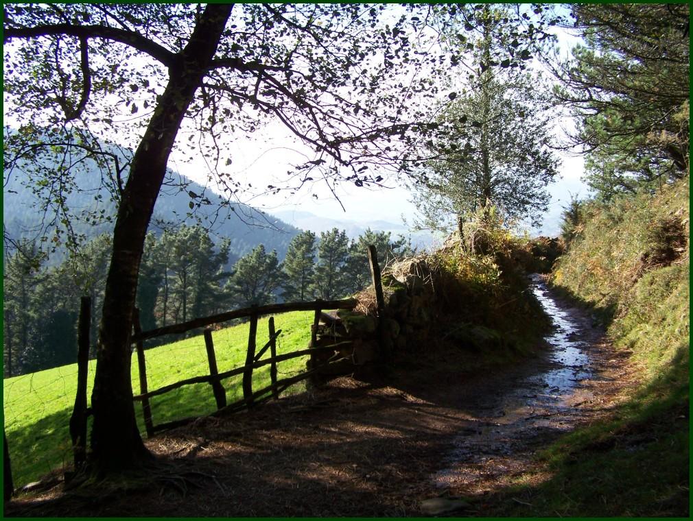 Adarra mendiko bidean // Adarra mountain