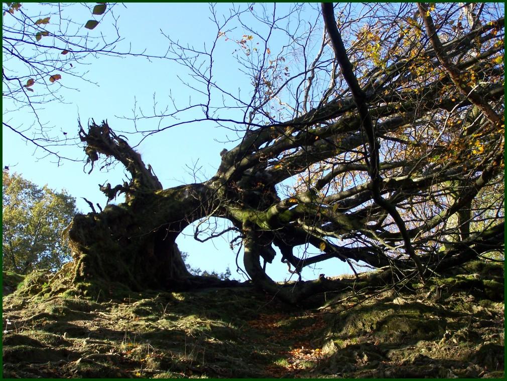 Zuhaitz eroria // Fallen tree