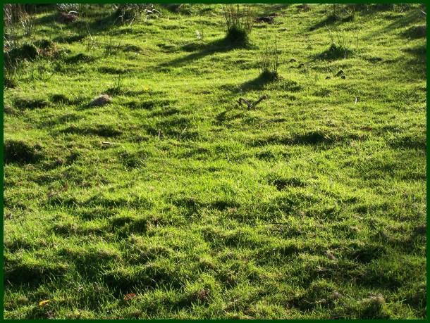 Belarra // Green
