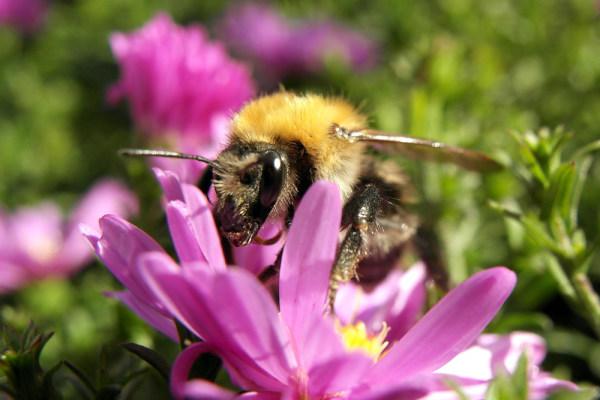 bumblebee's visit
