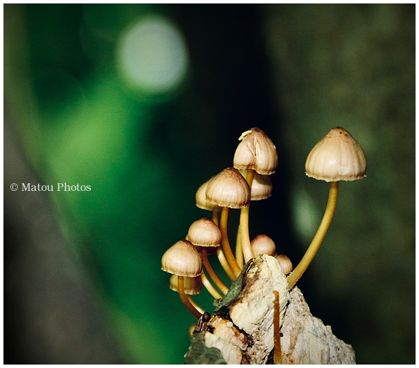 mushroom, champignon, summer