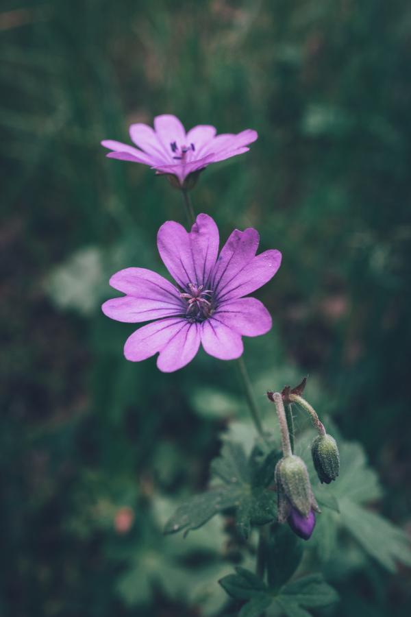 Twin Purple Flowers