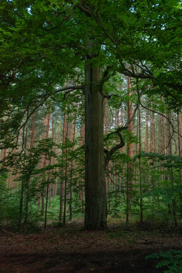 Forest in Krivoklatsko
