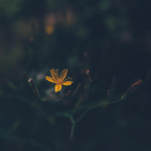 Subtle flower picture