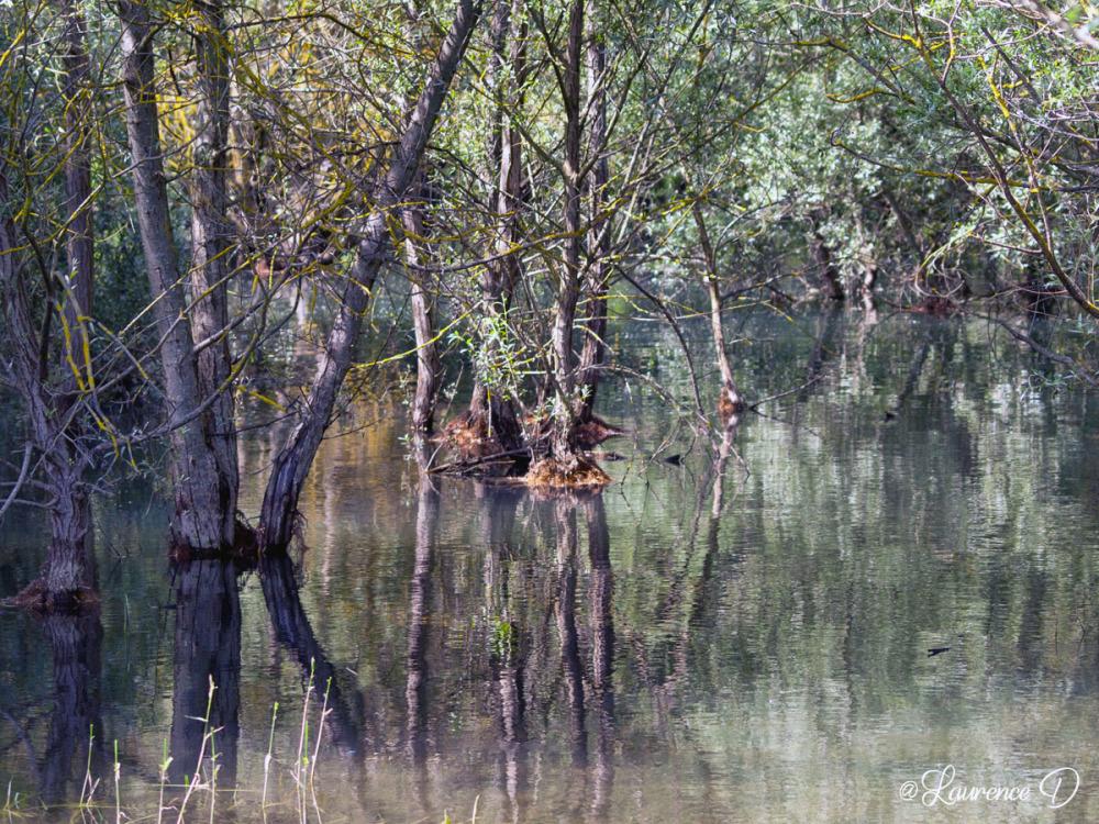 Lac de Montbel en Ariège
