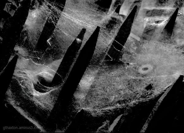 Cosmic Cobwebs